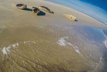 Waddenzee Werelderfgoed / Het Waddengebied in Europa is uniek in de wereld. Nergens anders inde wereld bestaat er een gebied zoals de Waddenzee. Dit gebied biedt, naast een woon- en pleisterplaats voor ontzettend veel diersoorten, een beschermde plek voor zeehonden om te rusten en om hun jongen te krijgen.
