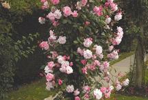 Home - Garden Ideas