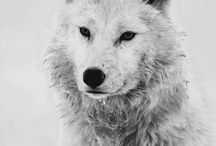 winter / by happy pinning