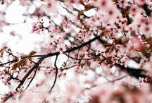 ☆ Spring Joy ★
