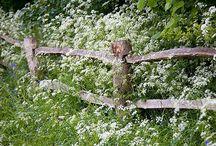 Wildblumenzauber