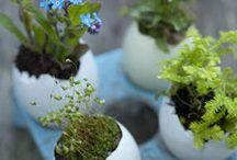 horta no jardim