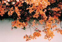 Orange Aes