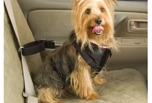 Pet Travel Safety | ARKlady Articles / by ARKlady