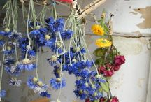 Drying flowers / I love drying flowers, and cut many from my own garden to preserve.
