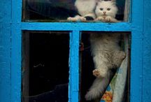 Cats / I love cats and I collect pins of them. Cute photos. :)