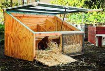 Chicken coops / A Chickens dream come true