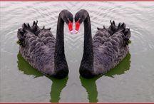 Pássaros Lindos!!! / Amo os pássaros