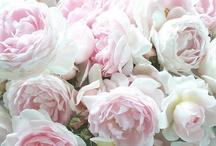 Roses / by Mary Fluaitt
