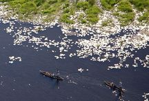 The Okavango Delta / Exploring the Okavango Delta in Botswana by mokoro (traditional canoe).