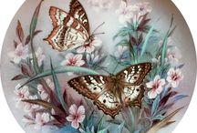 kelebeklerin