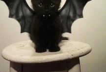 My dream pet