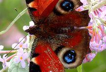 Kelebek / Kuş