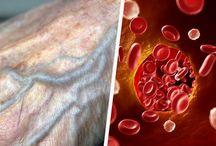 circulation du sang