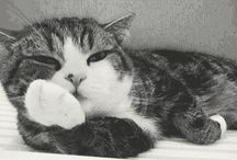 Cute-ocalypse Now / I love aminals <3