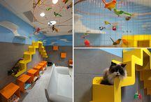 Cat Adoption Room Ideas