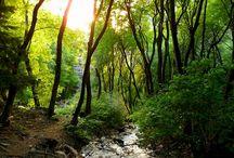 wanderlust / Hikes