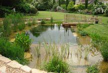 natural garden pool