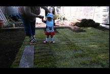 lawn turf supply and installation / lawn turf