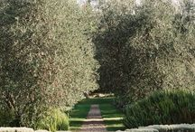 Ideas to steal from Italian Gardens