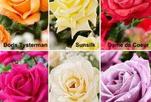flores paisagem e amigos