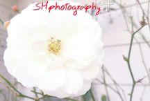 Flower #9