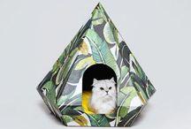 PA x Huts & Bay Cat Diamond