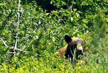 Waterton, Alberta / Photos from beautiful Southern Alberta - in and around Waterton National Park