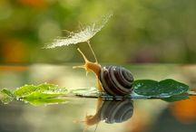 snail / snail