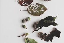 Ode to Autumn / This the season of mists and mellow fruitfulness... By Keates ...so this board is my very own ode to Autumn and is a collection of images that capture all that I love about this season...