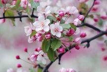 Természet, virágok