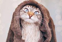 Katzen, süße Babykätzchen, Cats, kittens