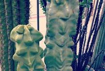 Cacti Favorites