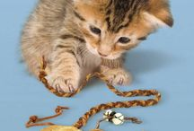 Cat toys / Cat toys I want for my bengals