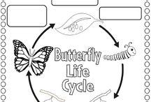 Přírodověda - vývojové cykly