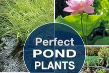 Come along Pond / Ponds and water plants