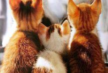 Pěkné Kočky