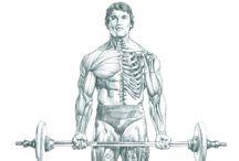 Sport & Anatomie