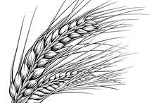 Harvest / Żniwa