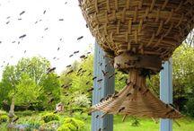 Bees / by Heather Scherbring