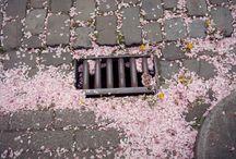 Photographs / by Kelli Bump