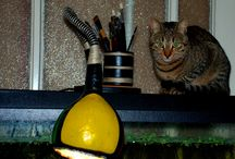 geri dönüşüm (masa lambası) / su kabağından masa lambasına...