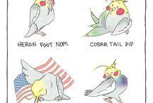 Best Birds Ever