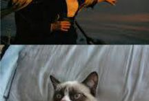 Γκρινιάρα γάτα