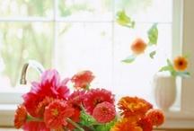Flowers, flowers everyday