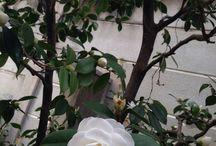 LOVE | Garden