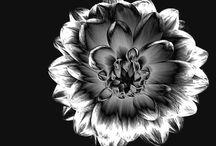 Schwarz-Weiß-Bilder