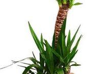 Çiçek, bitki / Çiçek, bitki ekimi ve bakımı