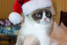 Captioned Cats / Grumpy and other cute or funny cat memes / by Lisa Gniech