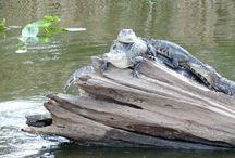 Florida Wildlife & Scenery